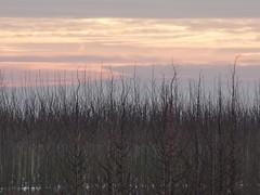 winterse lucht (ellyko2010) Tags: dag februari winterse