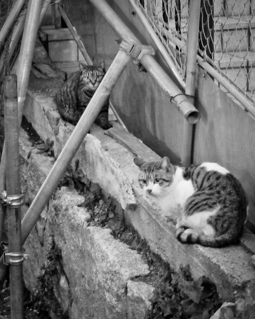Today's Cat@2012-03-03