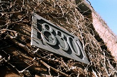830 (Georgie_grrl) Tags: toronto ontario sign wall angle branches perspective photographers ivy social number pentaxk1000 outing 830 cans2s rikenon12828mm torontophotowalks topwci2 corsoitaliaversion20