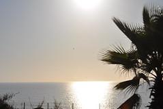 Il mare di Agadir (Hicham Charqane) Tags: nikon natura marocco fiori sole viaggi deserto d5000 charqane hichama