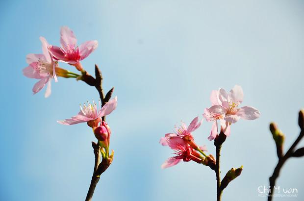 2012陽明山花季24.jpg