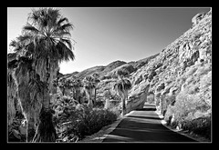 Road to Desert Oasis - Indian Canyons, Palm Springs, California (Blue Rave) Tags: pictures california road park trees blackandwhite bw mountains nature vanishingpoint desert hiking path framed palmsprings hike hills palmtrees frame openroad pathway indiancanyons framedportraits picturesinaframe