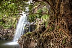 Seven Sacred Pools (Shawn Yates) Tags: nature water hawaii waterfall scenery hiking roots maui hana seven pools sevensacredpools sacred portfolio hdr canonef24105mm14lisusm 5dmarkii 5dmkii