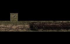 Essentials? - Kiebitz ~ Vanellus vanellus ~ Peewit - rusty drinking trough for cows - An Easter Paseo at Lange Lacke, UNESCO World Heritage Site Neusiedlersee (hedbavny) Tags: bird easter season austria sterreich nationalpark spring rust walk decay jahreszeit wiese rusty aves unescoworldheritagesite unesco paseo naturereserve gras ausflug rost vanellusvanellus rostig vogel burgenland frhling spaziergang vanitas erde neusiedlersee vergnglichkeit verfall unescowelterbe peewit osterspaziergang naturschutz charadriidae seewinkel langelacke zugvogel sterreichaustria kiebitz kuhtrnke regenpfeifer vogelschutz vogelparadies standvogel nationalparkneusiedlersee nationalparkneusiedlerseeseewinkel strichvogel gaukeln bodenbrter