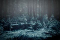 Twilight (106/366) (Resurfacing) Tags: blue trees fog forest twilight shadows spooky ethereal