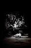 [ ؟ ] .. (F l S f a h .. ❥) Tags: black art darkness mask fear need 2012 pretending غموض غريبه رعب قناع أقنعة اقنعة مرعبة رمزيات مرعبه