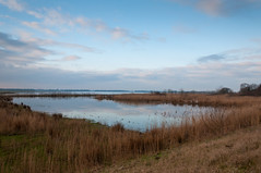 De Biesbosch - Dutch National Park De Biesbosch (RuudMorijn) Tags: park blue autumn winter light sunset wild sky lake holland reflection green fall reed nature water netherlands beautiful dutch field grass clouds rural forest river season landscape outside countryside pond scenery colorful europe quiet view natural outdoor background horizon country seasonal scenic meadow reserve peaceful nobody scene explore environment picturesque idyllic riet tranquil biesbosch landschap kleurrijk noordbrabant reflectie northbrabant nationaal wolkenlucht ringexcellence reservewinter