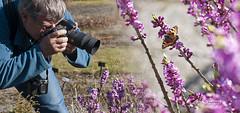 Impromptu photo walk (Birgit F) Tags: pink flower norway norge spring purple foliage 2012 grimstad austagder dømmesmoen