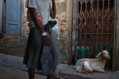 Guard goat - Mawlamyine, Myanmar (Monica de Luna) Tags: pavement burma goat myanmar passerby mawlamyine