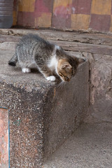One Big Step (Kam Sanghera) Tags: cat big kitten morocco step maroc marrakech aperturewoolwich apws