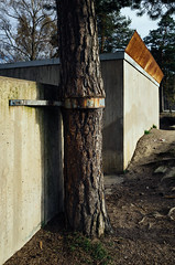 Tree supported by metal collar (VesaM) Tags: plants tree architecture finland concrete helsinki commerce structures security architectural business connected capitalism enterprise damaged trade buildingmaterials buildingmaterial mercantilism ironandsteel constructionmaterial metalandmineral