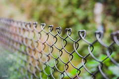 [346] - fences! (jathdreams) Tags: street travel wallpaper india green nature vintage fence 50mm nikon natural bokeh wanderlust greenery northeast darjeeling northindia travelphotography 50mmf14d northeastindia incredibleindia nikond5100