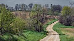 Twist on a one-lane road (myoldpostcards) Tags: road trees rural landscape illinois spring seasons unitedstates country il hills dirtroad rd gravelroad whitecemetery centralillinois menardcounty myoldpostcards vonliski