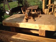 IMG_0732 (serafinocugnod) Tags: legno tavoli