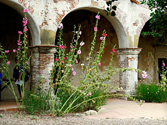 Hollyhocks and Mission arches (Bennilover) Tags: flowers gardens ruins arch may churches arches walkways missionsanjuancapistrano californiamissions hollyhocks blooming historiclandmarks