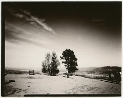 7 Trees 2016.jpg (Mamiya Man) Tags: california trees paper lens glendale large seven 4x5 format positive ilford direct schneider 72xl