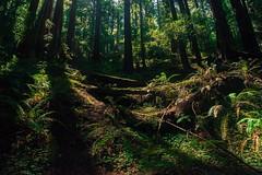 Marin Headlands (JLSideri) Tags: california trees forest landscape woods marinheadlands