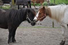 20160418 pony rijden leefgroep1 SP_00041 (leefschool) Tags: pony rijden leefgroep1 20160418