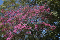 Ibirapuera (ALESP) (quanaval_sp) Tags: brazil brasil landscape sopaulo paisagem sampa sp ibirapuera alesp