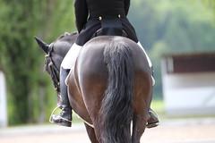 IMG_1516 (dreiwn) Tags: horse pony horseshow pferde pferd equestrian horseback reiten horseriding showjumping dressage reitturnier dressur reitsport dressyr ilsfeld dressuur ridingclub junioren ridingarena pferdesport springreiten reitplatz reitverein dressurreiten dressurpferd dressurprfung jugentturnier