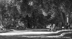 Palermo (Lord Seth) Tags: bw italy nikon candid streetphotography palermo sicilia biancoenero 2015 giardinobotanico d5000 lordseth