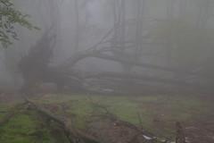 Parque natural de #Gorbeia #Orozko #DePaseoConLarri #Flickr -081 (Jose Asensio Larrinaga (Larri) Larri1276) Tags: 2016 parquenatural gorbeia naturaleza bizkaia orozko euskalherria basquecountry