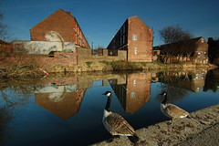 """What do you think of it, then?"" (blinkingidiot) Tags: nottingham canada art reflections painting canal geese mural nottinghamcanal nottinghamwildlife"