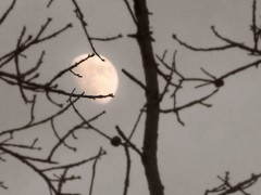 3/3/12 (ShelbyCoxPhotography) Tags: winter moon white black tree photography march dof branches depthoffield focalsoften shelbycoxphotography