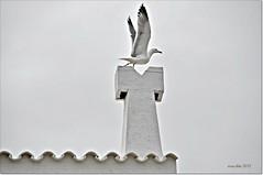 Gaviota sobre tejado.Seagull on roof (ironde) Tags: island islands spain tejado isla gaviota ciudadela menorca baleares ciutadella minorca chimenea balearicislands ironde