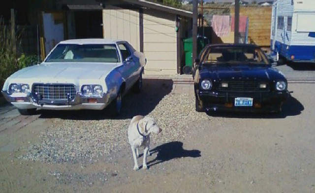 78 king cobra/72 GRAN TORINO/and nala
