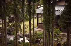 (HOME) Green Kyoto 1/5 (Alberto Sen (www.albertosen.es)) Tags: verde green japan nikon kyoto alberto kioto japon sen d300s albertorg albertosen