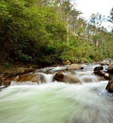 East Kiewa River (Rocky Valley Branch) (phunnyfotos) Tags: panorama motion water forest river movement nikon rocks australia victoria vic bogong kiewariver northeastvictoria kiewavalley nikond5100 phunnyfotos