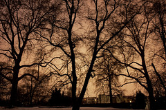 berliner schneehimmel (elisewin?) Tags: park city trees winter snow cold berlin dark loneliness empty fear viktoriapark