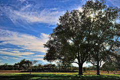 Zilker Park (thor_mark) Tags: trees nature austin texas unitedstates blueskies zilkerpark dogsplaying project365 hikeandbiketrail colorefexpro cloudwisps nikond90 grassyarea ladybirdlakewalk