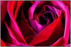 Valentine's Day Rose - Red (Walker Evans is my Hero) Tags: red abstract flower color macro rose valentine micro valentinesday nikon200mm