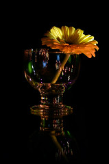 GERBERA (JONE VASAITIS) Tags: black flower reflection glass yellow dark negro flor amarillo gelb gerbera 1001nights blume reflexions glas vidrio reflexin oscuro 1001nightsmagiccity