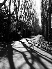 Ombres hivernales (Richard Lehoux) Tags: madrid del campo espagne moro campodelmoro