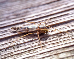 MACRO PROTOTYPE TEST 8X C-MOUNT-2 (fergusoptical) Tags: wood zoo bugs chrisferguson macroimages iphonemacro macrovideo iphonecameracase fergusoptical iphonemacroimages