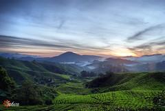 Endless (SunnySakura) Tags: sunnysakura sakuraphotographicstudio nikon d3000 sunrise landscape cameronhighland sgpalas