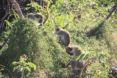 "Primates • <a style=""font-size:0.8em;"" href=""http://www.flickr.com/photos/57634067@N04/6929352523/"" target=""_blank"">View on Flickr</a>"