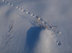 All Roads lead to Home, 1 (Axiraa - back soon) Tags: winter snow mouse estonia track footprints mice trail hiir jlg