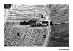 rural landscape bw (Osvaldo_Zoom) Tags: bw rural landscape bn campagna marche