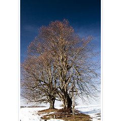 Bordering the Divine (horstmall - holidays!) Tags: tree de cross linden bluesky kreuz alb arbre baum blauerhimmel linde sacredtree cielbleu schwbischealb tilia feldkreuz westerheim arbresacre majestictrees jurajura jurasuabe horstmall heiligerbaum sswabian alpsjura souabezwabische suabia schwabenin juravapska jurasvafnesku alparnirjura szwabskasvabya alplerivbsk albaalpes subios vabijos alps schwabisk