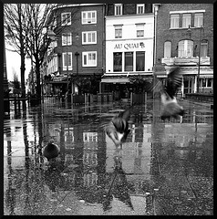 Platform number 8 (Jean-Luc Lopoldi) Tags: bw reflection wet rain downtown place noiretblanc pigeons pluie ville faade flappingwings