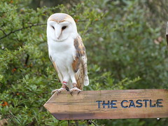 Tythe (GillWilson) Tags: worldowltrust