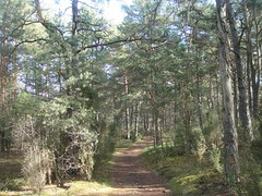 DSC06615 (tadeuszdorada) Tags: forest walks paths weekends challenges kampinos