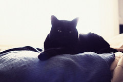 ___________ (lauren s_) Tags: morning blue light pet sun window animal cat blackcat paw bedroom bright grain kitty ears blanket meow washedout