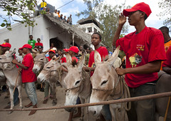 Donkey race for Maulidi - Lamu kenya (Eric Lafforgue) Tags: africa island kenya culture unescoworldheritagesite afrika tradition lamu swahili afrique eastafrica qunia lafforgue  qunia   111907  kea   tradingroute a