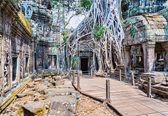 Cambodia - Siem Reap - Ta Phrom - 21 03 2014 (Redstone Hill) Tags: temple cambodia buddha buddhist buddhism explore laracroft siemreap angkor buddhisttemple taphrom topaz 500px topazadjust laracrofttomb indochinaencompassed neilbirchall