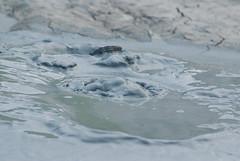 Salse di Nirano (Matteo_Marchionni) Tags: mud bubbles bolle salse nirano